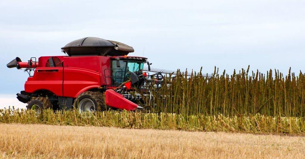 Harvesting a hemp crop