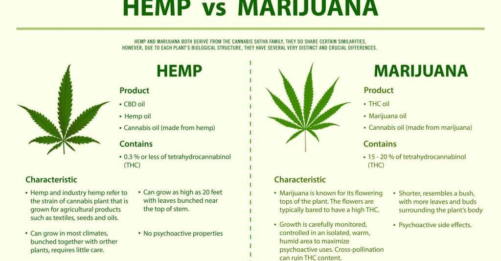 Infographic of hemp vs marijuana