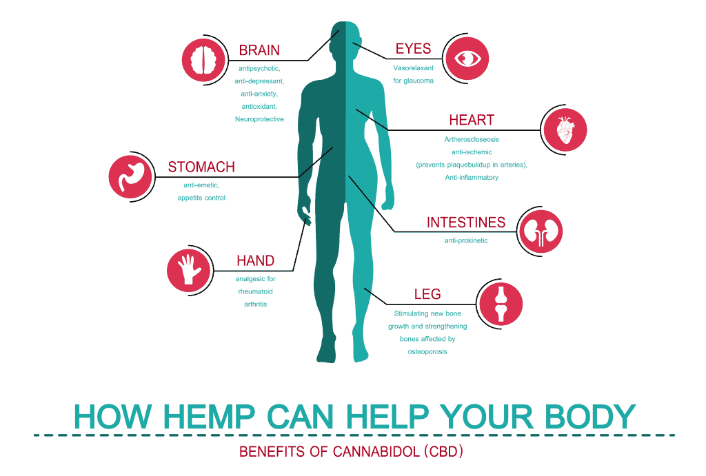 Ilustration showing benefits of CBD on the human body