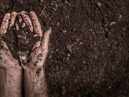Hands preparing soil to grow hemp plant