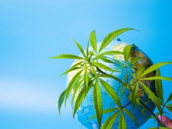 Geogrpahy globe of Earth with hemp plant growing nearby